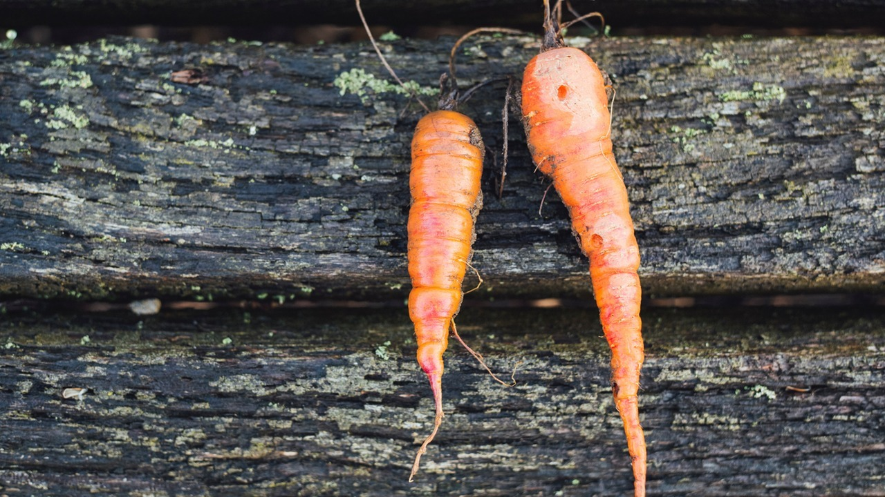 Alimentos orgánicos y alimentos sostenibles- ¿cuál es la diferencia?